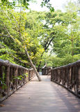 The wooden bridge path among wild forest Royalty Free Stock Image