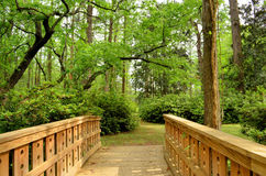 Wooden Bridge Pathway Into The Woods Royalty Free Stock Image