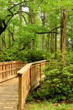 Wooden Bridge Pathway Into The Woods Portrait Royalty Free Stock Images