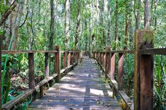 Wooden bridge through peat swamp forest Stock Image