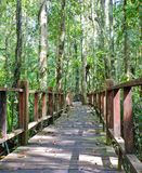 Wooden bridge through peat swamp forest Stock Photos