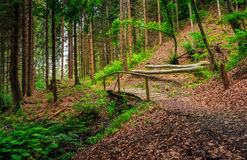 Wooden bridge in pine forest. Wooden bridge on the foot path  in pine forest Stock Images
