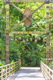 Wooden bridge in rain forest Stock Photo