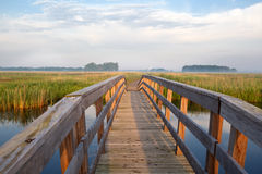 Wooden bridge through river in morning Royalty Free Stock Photos