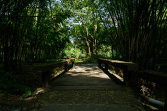 Wooden bridge in shady bamboo of sunny summer afternoon Stock Image