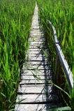 Wooden Bridge at Sic Stock Images