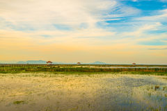 Wooden bridge spanning the lake wider. The vast marsh at sunset in the park, one of Thailand Stock Image