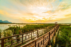 Wooden bridge spanning the lake wider. The vast marsh at sunset in the park, one of Thailand Royalty Free Stock Image