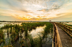 Wooden bridge spanning the lake wider. The vast marsh at sunset in the park, one of Thailand Stock Photos