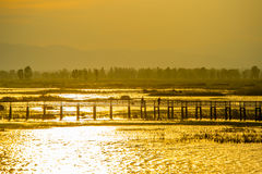 Wooden bridge spanning the lake wider. The vast marsh at sunset in the park, one of Thailand Stock Photo