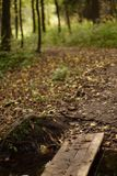 Wooden bridge, spilled across a stream on a path in a deciduous forest. Stock Images