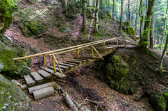 Wooden bridge with stairs into forest. Wooden bridge path with stairs Royalty Free Stock Photo