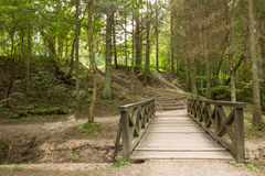 Wooden bridge and stairs in the green forest Royalty Free Stock Image