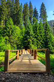 Wooden bridge stretching into the forest vertical Royalty Free Stock Photo