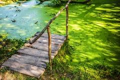 Wooden bridge in swamp with duckweed Stock Images