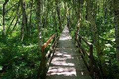 Wooden bridge through the swamp in a forest Stock Photos