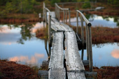 Wooden bridge in the swamp Royalty Free Stock Photography