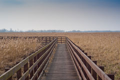 Wooden bridge on swamps Royalty Free Stock Photo