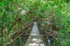 Wooden bridge to  jungle Stock Image