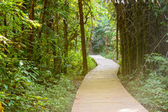 Wooden bridge to jungle with natural background Stock Photos