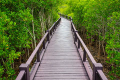 Wooden bridge to the jungle,Thailand Royalty Free Stock Images