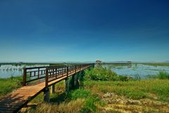 Wooden bridge in to the lake Royalty Free Stock Photo