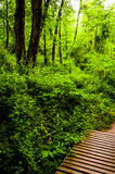 Wooden bridge on a trail in a lush forest in Codorus State Park, Stock Photos