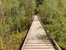 Wooden bridge over a river. Wooden bridge between trees and on the arm of a river Royalty Free Stock Images