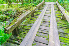 Wooden bridge in tropical green forest covered with  moss . Stock Photo