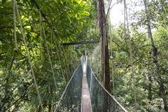 Wooden bridge in Tropical jungle, Malaysia Stock Photo