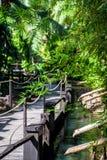 Wooden bridge among Tropical lush bamboo Stock Photography