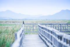 Wooden bridge in tropical pond at sunset, Little Cormorant hangi stock photos