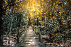 Wooden bridge. The wooden bridge walkway into the forest Royalty Free Stock Photos