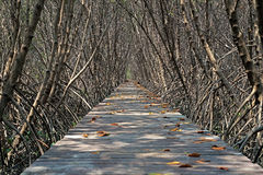 Wooden bridge walkway into mangrove forest Royalty Free Stock Images