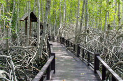 The wooden bridge walkway in mangrove forest at Pranburi Forest Stock Photos