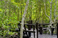 The wooden bridge walkway in mangrove forest at Pranburi Forest National Park, Prachuap Khiri Khan, Thailand Stock Photography