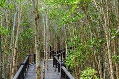 The wooden bridge walkway in mangrove forest at Pranburi Forest National Park, Prachuap Khiri Khan, Thailand Stock Photos