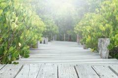 Wooden bridge walkway in mangrove forest, selective focus. Stock Photos