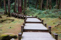 Wooden bridge. Walkway in pine forest at Alishan Forest Park, Taiwam Stock Photography