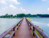 Bridge. Wooden Bridge Walkway in The Swamp Landscape Head to The Park with Blue Sky on Sunshine Day Royalty Free Stock Image