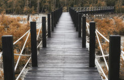 Wooden bridge of walkways in mangrove forest with autumn leaves. Royalty Free Stock Image