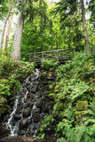Wooden bridge and waterfall with fern plants in european forest Stock Photos