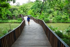 Wooden bridge with a woman walking. royalty free stock photos