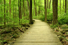 Wooden bridge in the woods Royalty Free Stock Photo