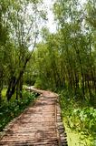 The wooden bridge in the woods Royalty Free Stock Photo