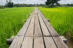 Wooden bridge 100 years old Royalty Free Stock Photo