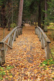 Wooden bridges in an autumn forest. Carpet from yellow autumn leaves on the ground, a wood and wooden bridges. Park in Shchelykovo, Russia Royalty Free Stock Image