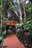 Wooden brinndge in green jungle alley at Loro park on Tenerife island, Spain Stock Photo