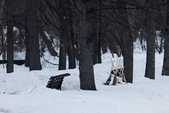 Wooden brooms stand in the form of a pyramid in the snow-covered. Park `Aptekarsky ogorod` in March. Botanical garden of Moscow University `Aptekarsky ogorod Stock Photo