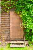 Wooden brown door framed by grape leaves - nature background. Bright green grape leaves framing the door in the garden. Fresh leaves of grape above the wooden stock photo